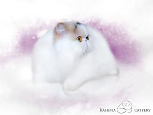 Luciola Panda*PL of Kahena